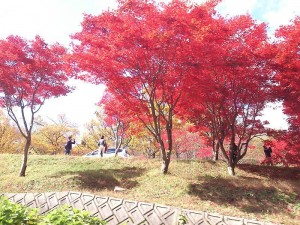hiroshima_20141108_2